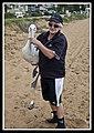Margate Pelican Rescue- Hammy-13 (6807961552).jpg