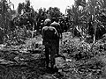 Marines walk past dead Japanese on Peleliu.jpg