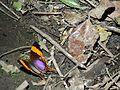 Mariposas en el Ávila.jpg