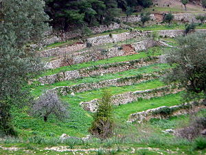 Agriculture étagée