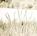 Marsh Bird (3615200605).jpg
