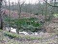 Marshy Area, Sigston Wood - geograph.org.uk - 124143.jpg