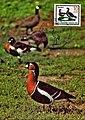 Maxicard 1985 GDR MiNr2953 pm B005a.jpg