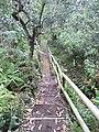 Medellin, Antioquia, Colombia - panoramio (12).jpg