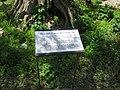 Medieval garden (Perugia) 39.jpg