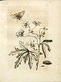 Merian - Der Raupen wunderbare Verwandelung und sonderbare Blumennahrung - Abb 15.jpg