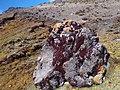Moho en una piedra a más de 4000 msnm - panoramio.jpg