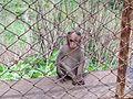 Monkey4569.jpg
