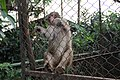 Monkey in the cage 2.jpg