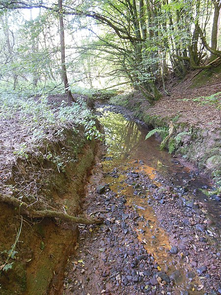 Kambach Brook in Montbronn
