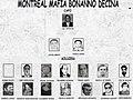 Montreal Mafia Bonanno Decina.jpg