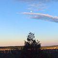 Moon over pine at grand canyon north rim.jpg