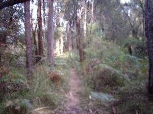 Mount Kembla - Mount Kembla summit track