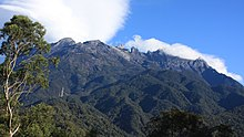 Зубчатая вершина горы возвышается над поросшими деревьями склонами с более близким деревом на переднем плане.