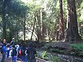 Muir Woods National Monument group and stream.jpg