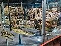 Museum Of The Rockies Montana4.jpg