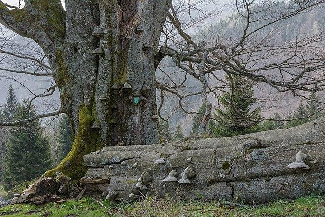 Twelfth prize: Nationalpark Kalkalpen, Upper Austria, Austria | by Isiwal
