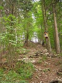 NPR Starý hrad, les 1.jpg