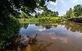 NSG Rurauenwald-Indemuendung FFH-Gebiet Indemündung Sandbank mit Ufervegetation XI-I.jpg