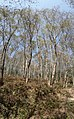 Nagarjun- shivapuri national park 20190316 145308.jpg