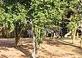 Nandankanan29.jpg