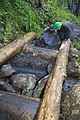 National Public Lands Day 2014 at Mount Rainier National Park (051), Narada.jpg