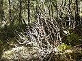 Nature - Natura (14995702637).jpg