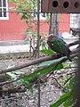 Nature 0190628-WA0119.jpg