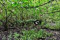 Nature Park 02.JPG