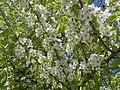 Nature in Smolensk - 22.jpg