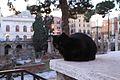 Nature of Rome 2013 002.jpg