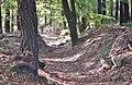Naturpark und Biosphärenreservat Pfälzerwald - panoramio (12).jpg