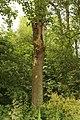 Naturschutzgebiet Neuenkirchener Moor 06.JPG