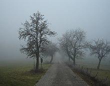 220px-Nebel_in_der_Region_Rh%C3%B6n_0138