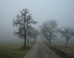 Nebel in der Region Rhön 01386.jpg