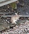 Network Bunny (5151813197).jpg