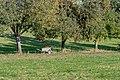 Neuhofen adK Dambach Mostobsternte-3950.jpg