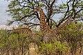 Nkomazi Game Reserve, South Africa (22652763535).jpg