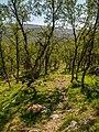 Norwegen Langfjorddalen Naturreservat P1290403.jpg