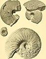 Nova Guinea - résultats de l'expédition scientifique néerlandaise à la Nouvelle-Guinée en 1903(-1920) (1913) (14591720458).jpg