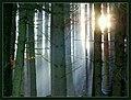 Novemberwald - Flickr - Stiller Beobachter.jpg