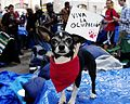 Occupy Wall Street Chihuahua 2011 Shankbone 3.JPG