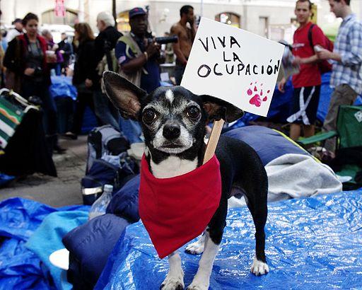 Occupy Wall Street Chihuahua 2011 Shankbone 3