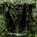 Okřehek ve vodní hrázce.jpg
