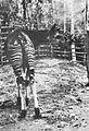 Okapi, Belgian Congo.jpg