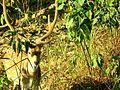 Ol' Deer.jpg