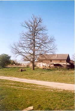 Old tree and farm, Grudki (Gródek), Gmin Bialowieza, Poland, May 2007.jpg