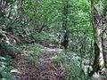 Old woodland track, Allt-y-Hafod - geograph.org.uk - 907083.jpg