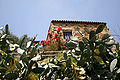 Opuntia ficus-indica JPG.jpg