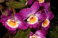 Orchid (4387903648) (2).jpg